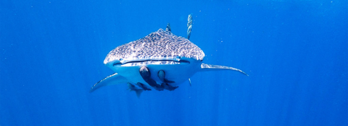 Whale-Shark-Diaries-Travel-Blogger-of-the-Year-2020
